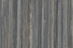 t5237 Black Sheep