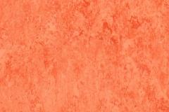 Salmon 642
